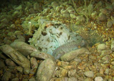 Octopus - Tauchfreizeit Kroatien